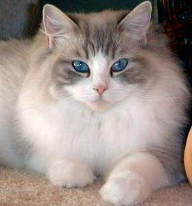 Smashwords Super Cool Cat Facts And Breeds A Book By New Book